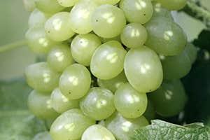 Grape-seed polyphenols